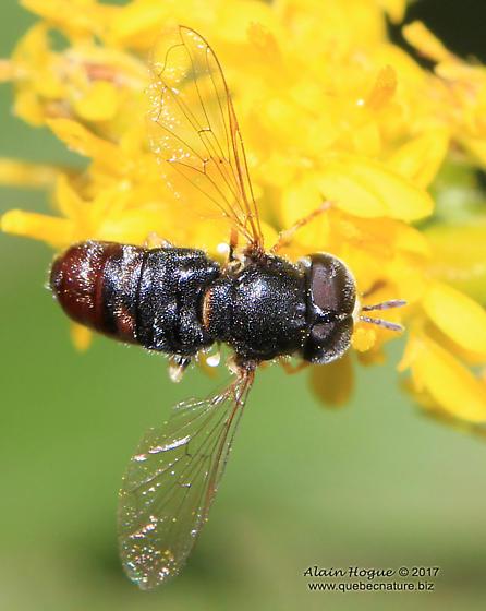 Fly - Paragus