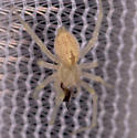 Spider for ID