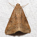 Yellow Mocis Moth - Hodges #8746 - Mocis disseverans