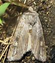 Moth - Lithophane