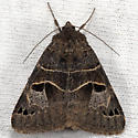Unknown moth - Drasteria edwardsii