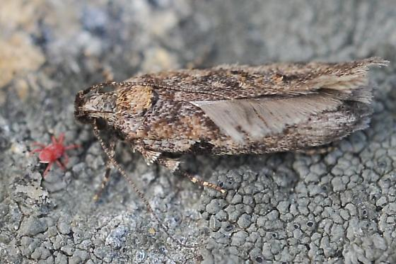 Moth watching a mite