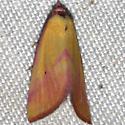 No. 295 Phytometra ernestinana? - Phytometra ernestinana