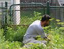 Urban Pollinator Gardener 'in situ' - male