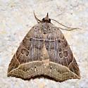 Please help us to identify this moth. - Isogona tenuis