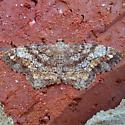 One-spotted Variant - Hypagyrtis unipunctata