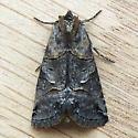 Spectacled Nettle Moth (Abrostola urentis)  - Abrostola urentis