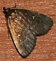 Moth 50 - Idia