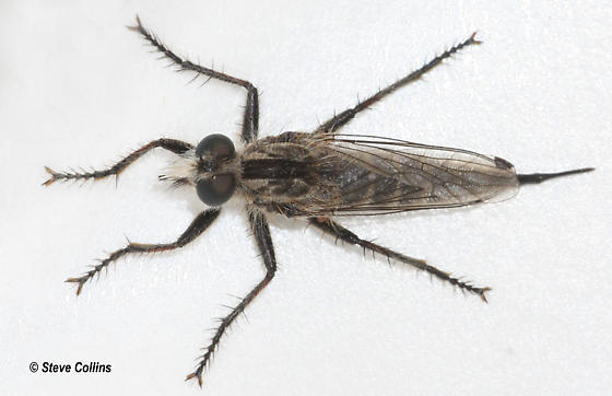 Efferia - female