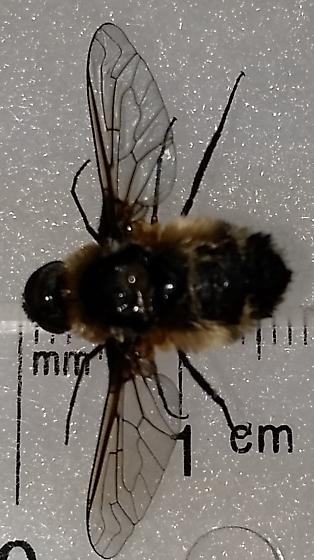 Not a Bee? - Villa