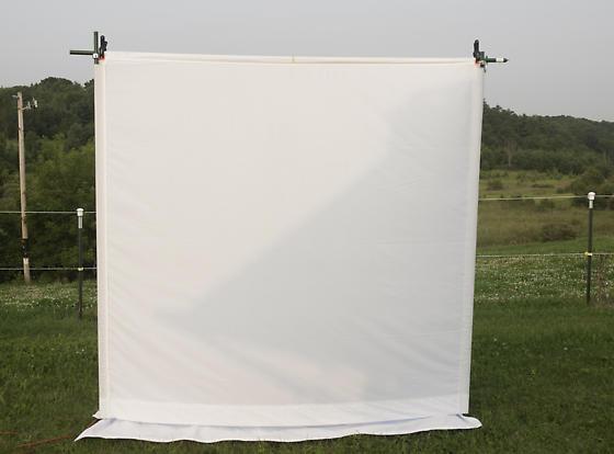 Black light moth sheet