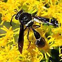 which mason wasp? - Eumenes fraternus