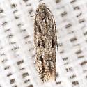 Pepper Flowerbud Moth - Hodges #2032 - Ymeldia janae