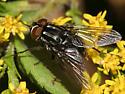 Fly - Graphomya