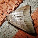 A slightly worn moth. ID, please. - Mocis texana