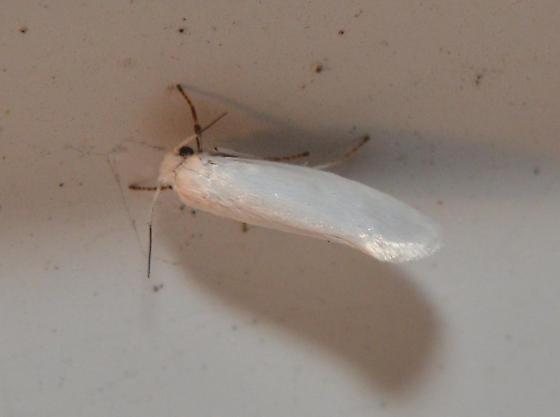 moth at porch light