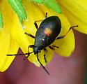 black and orange Bug - Largus