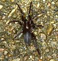 spider ID help, please