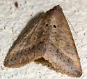 Bugshot Moth - Mocis latipes