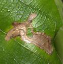 Sawtooth Oak Leaf Mine ID Request - Stigmella