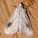 Moth 810-01 - Rivula propinqualis