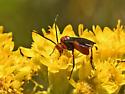 Wasp 473A 2695 & 2713 & 2714 - Crassomicrodus clypealis