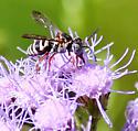 Unidentified Fly - Epeolus