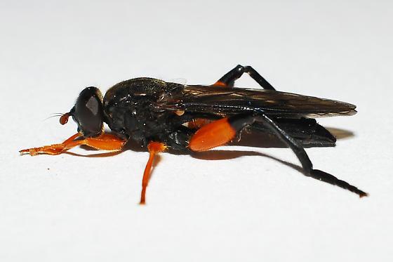 wasp mimic - Chalcosyrphus curvaria