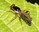 fly - Cordilura