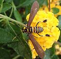 moth - Horama panthalon
