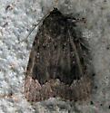9638 Copper Underwing - Amphipyra pyramidoides