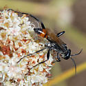 ID for a wasp? - Prionyx parkeri - male