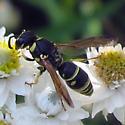 Hymenoptera 8 02 09 01b