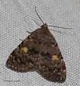 Pretty brown moth at the m.v. lamp - Idia aemula