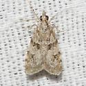 Double-striped Scoparia Moth - Hodges#4716 - Scoparia biplagialis