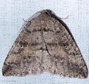 Drepanulatrix secundaria - Drepanulatrix - male