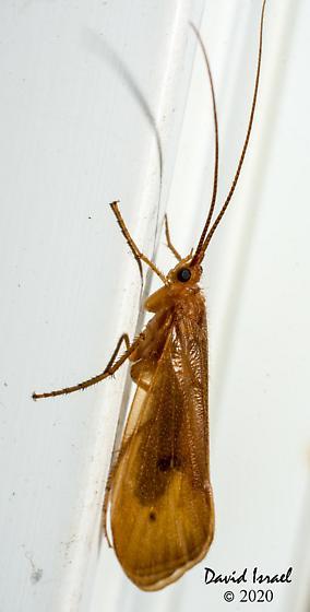 Tricoptera