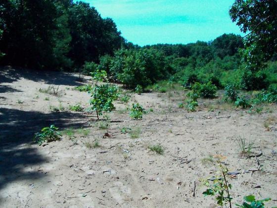 Wasp habitat