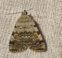 Unidentified Moth - Idia americalis