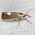Lead-colored Lichen Moth - Hodges #8067 - Cisthene plumbea