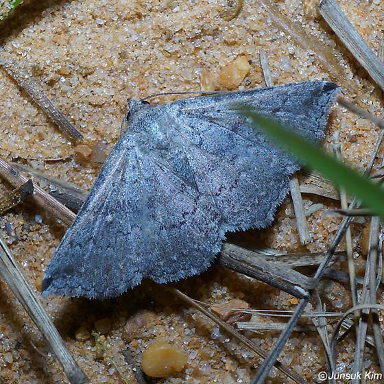 moth 4 - Lesmone hinna
