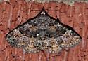 Common fungus moth - Metalectra discalis - female