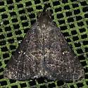 Tetanolita mynesalis