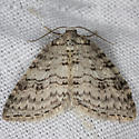 unknown  moth - Venusia duodecemlineata