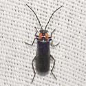 Soldier Beetle - Rhagonycha lineola