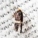 Pygmy Leafmining Moth