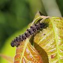 Caterpillar 070818 - Apantesis
