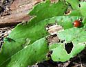 caterpillar - nearby plant