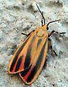 moth - Hypoprepia fucosa