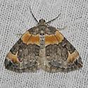 Orange-barred Carpet - Hodges#7189  - Dysstroma hersiliata